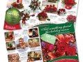 brochures14